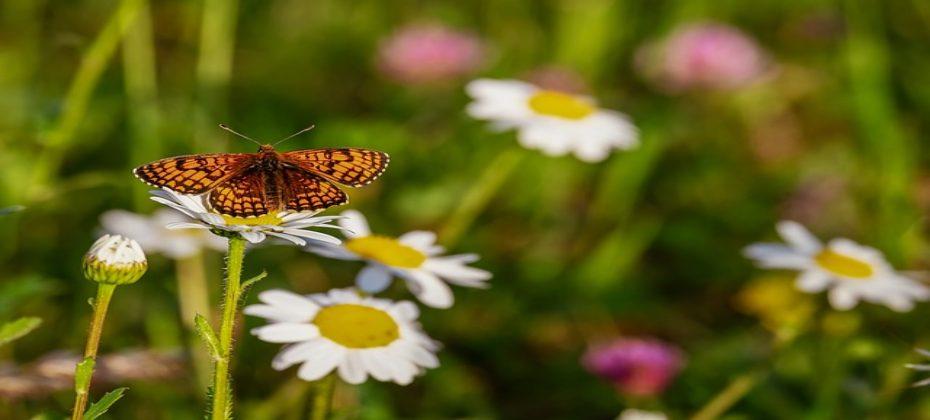 butterfly-3418535_640 (1)